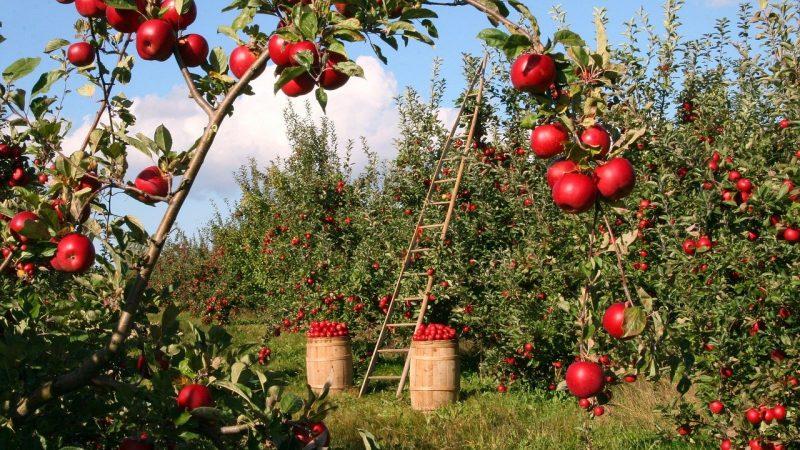 نقيب الفلاحين يحذر من استخدام مبيدات ومخصبات غير مصرحة في زراعة البطيخ